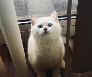 aesthetic, blue eyes, and neko image