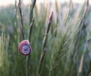 nature, snail, and outside image