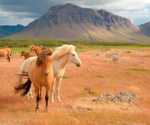 beautiful, horse, and horses image
