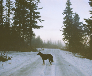 dog, forest, and winter image