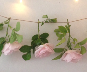 header, pack, and flowers image