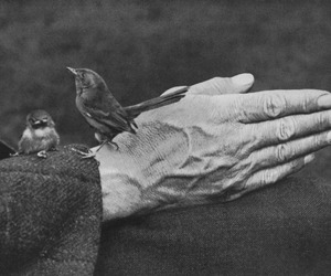 bird and old image