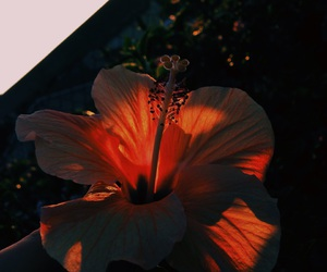flowers, theme, and dark image