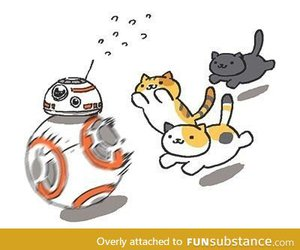 bb-8, cat, and star wars image