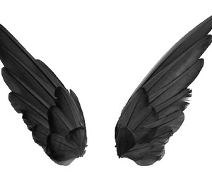 transparent, wings, and black image