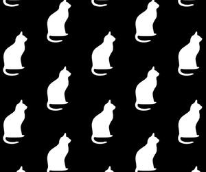 background, blanco y negro, and Gatos image