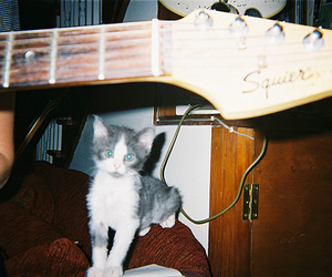 cat, disposable, and kitty image