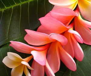 flowers, pink, and tropical image