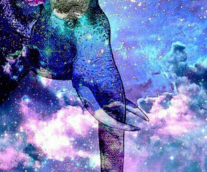 elephant, galaxy, and hipster image