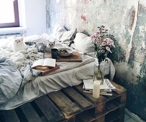 cats and rooms image