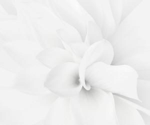 dark and white image