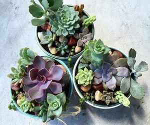 plant, plants, and succulent image