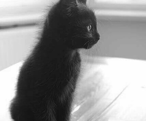 black, cat, and kitten image