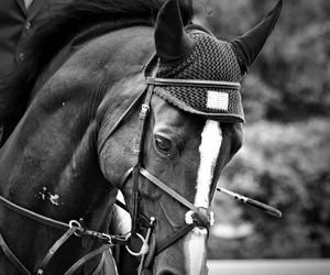 beautiful, horse, and beauty image