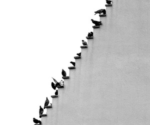 birds, black, and stairs image