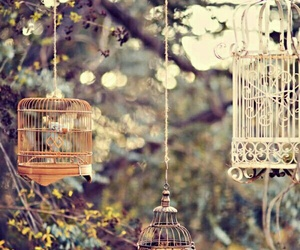 vintage, cage, and nature image