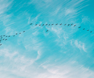 sky, bird, and blue image