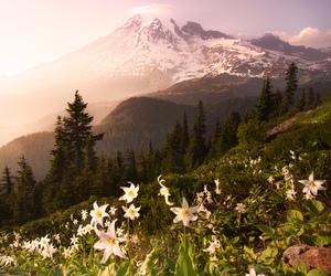 alpine, beautiful, and cascades image