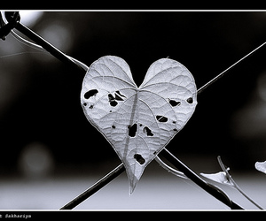 heart, love, and hurt image