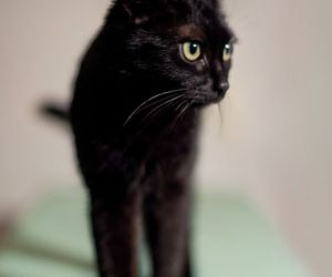 black cats, meow, and cats image