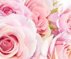 flowers, girly, and followforfollow image