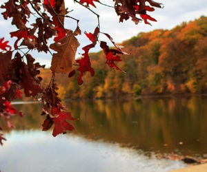 color, nature, and fall image