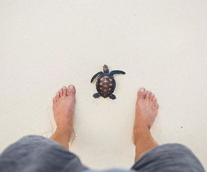 baby, travel, and turtles image