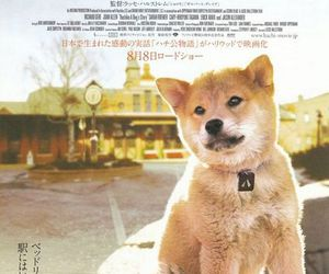 hachi and dog image