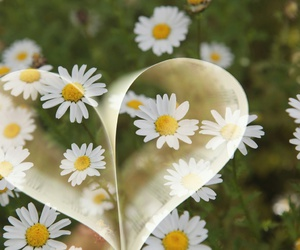 flowers, heart, and book image