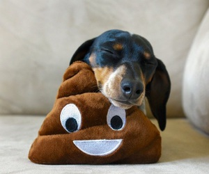 dog, tired, and funny image