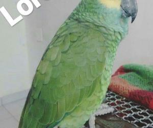 baby, papagaio, and loro image