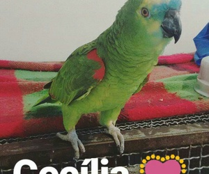 baby, cecilia, and papagaio image