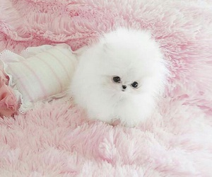 pink, cute, and puppy image