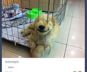 lol, puppy, and same image