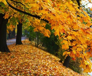colours, fall, and leaves image
