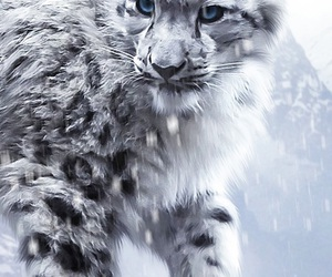 adorable, fluffy, and pretty image