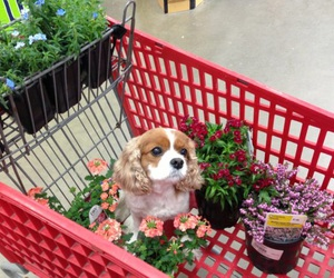 dog, flowers, and puppy image