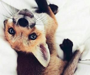 fox, animal, and pet image