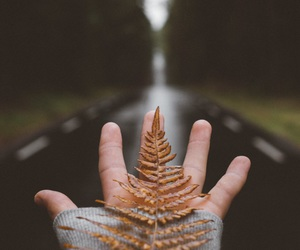 autumn, road, and photography image