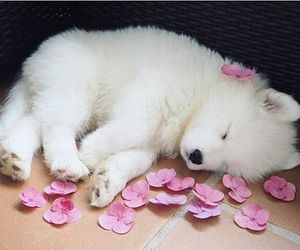 animals, aww, and puppy image
