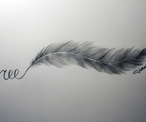 feather, live, and photography image