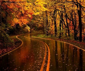 autumn, road, and tree image