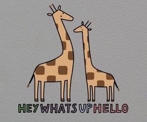 giraffe, giraffes, and hello image