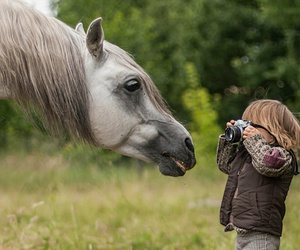 horse, animal, and kids image
