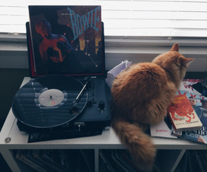 grunge, cat, and music image