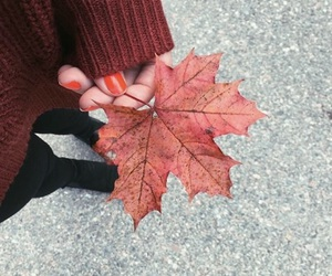 autumn, fall, and happiness image