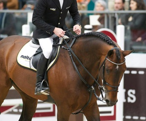 horse and marcus ehning image