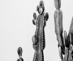 cactus and black and white image