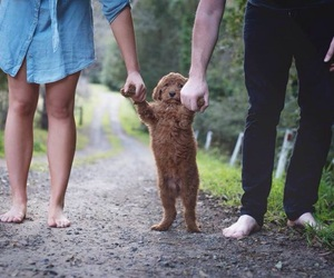 dog, family, and baby image