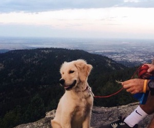adventure, dog, and cute image